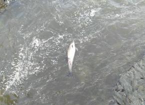 240217 Foto golfiño