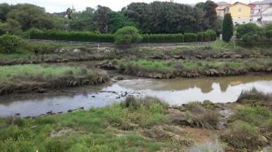 BNG Cervo_vertido rio covo(2) 15-06-17