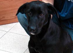 Medio Ambiente de Burela busca dono para unha cadela vagabunda