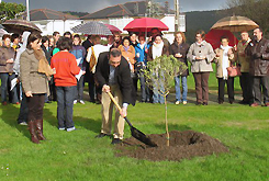 En Xove plantaron un olivo e fixeron unha concentración o día contra a violencia de xénero