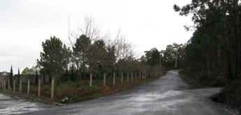O Concello de Burela plantará árbores autóctonas na subida do cemiterio ao Monte Castelo