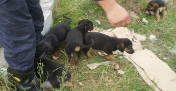 Medio Ambiente de Ribadeo fai unha chamada á cidadanía para que adopten oito cans que foron acollidos
