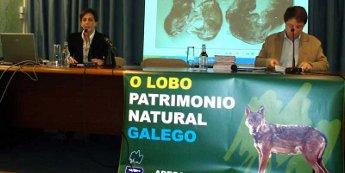 Segundo ADEGA, a Xunta reduce un 66 por cen as axudas á prevención dos ataques dos lobos