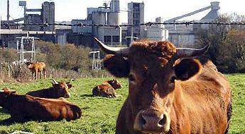 ADEGA denuncia a contaminación por flúor procedente da factoría de aluminio ALCOA en San Cibrao