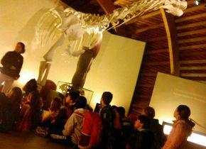 O CEIP San Cosme viaxou ao Xurásico