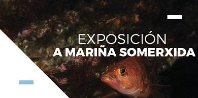 """A Exposición """"A Mariña Somerxida"""" visita Ribadeo do 12 ao 26 de novembro"""