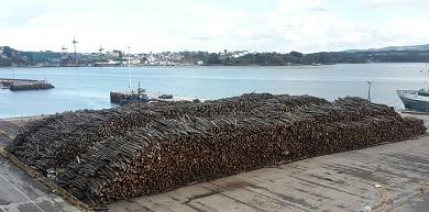 Fernando Suárez ven de dirixirlle unha nova carta a Portos de Galicia sobre a praga de mosquitos ocasionada polo amoreamento de madeira no porto de Mirasol