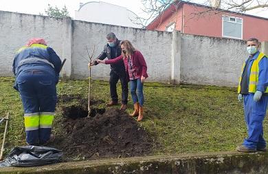 O Concello de Burela plantou árbores autóctonas nas inmediacións da Casa Consistorial e no parque Tíjola