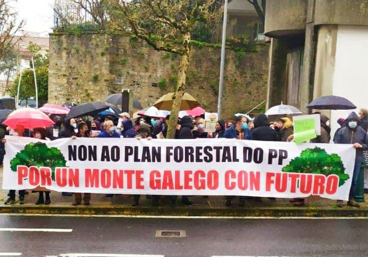 Demandan á Xunta que concrete o paquete de medidas para levar a cabo a moratoria do eucalipto