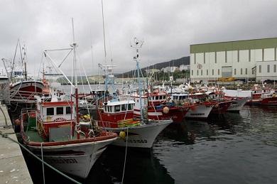 Un barco de Burela chegou este xoves a porto con 14 positivos