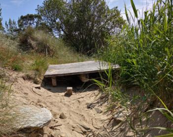 Por Viveiro pide que se melloren os accesos á praia de Area e que se repoñan as árbores plantadas na contorna de Praza de Abastos