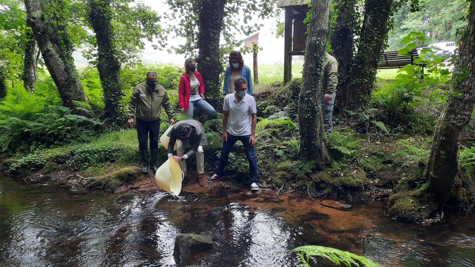 50.000 alevíns de troita para  repoboar o río Xunco, en Cervo