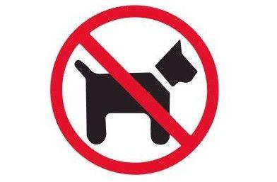 O Concello de Viveiro recorda a normativa sobre animais domésticos nas praias do municipio
