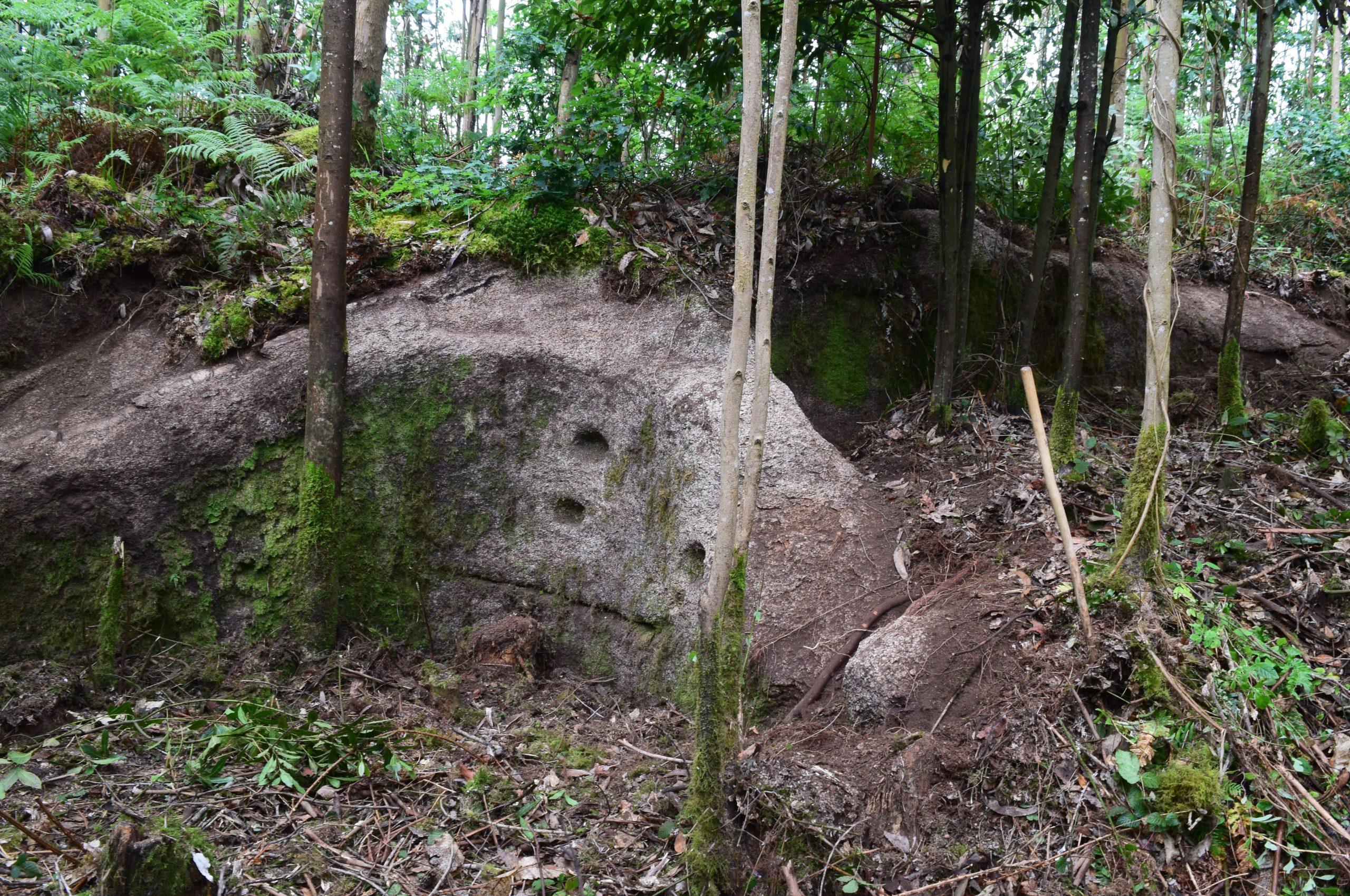 Un castro de Alfoz, mal catalogado pola Xunta, sofre graves danos tras unha plantación de eucaliptos