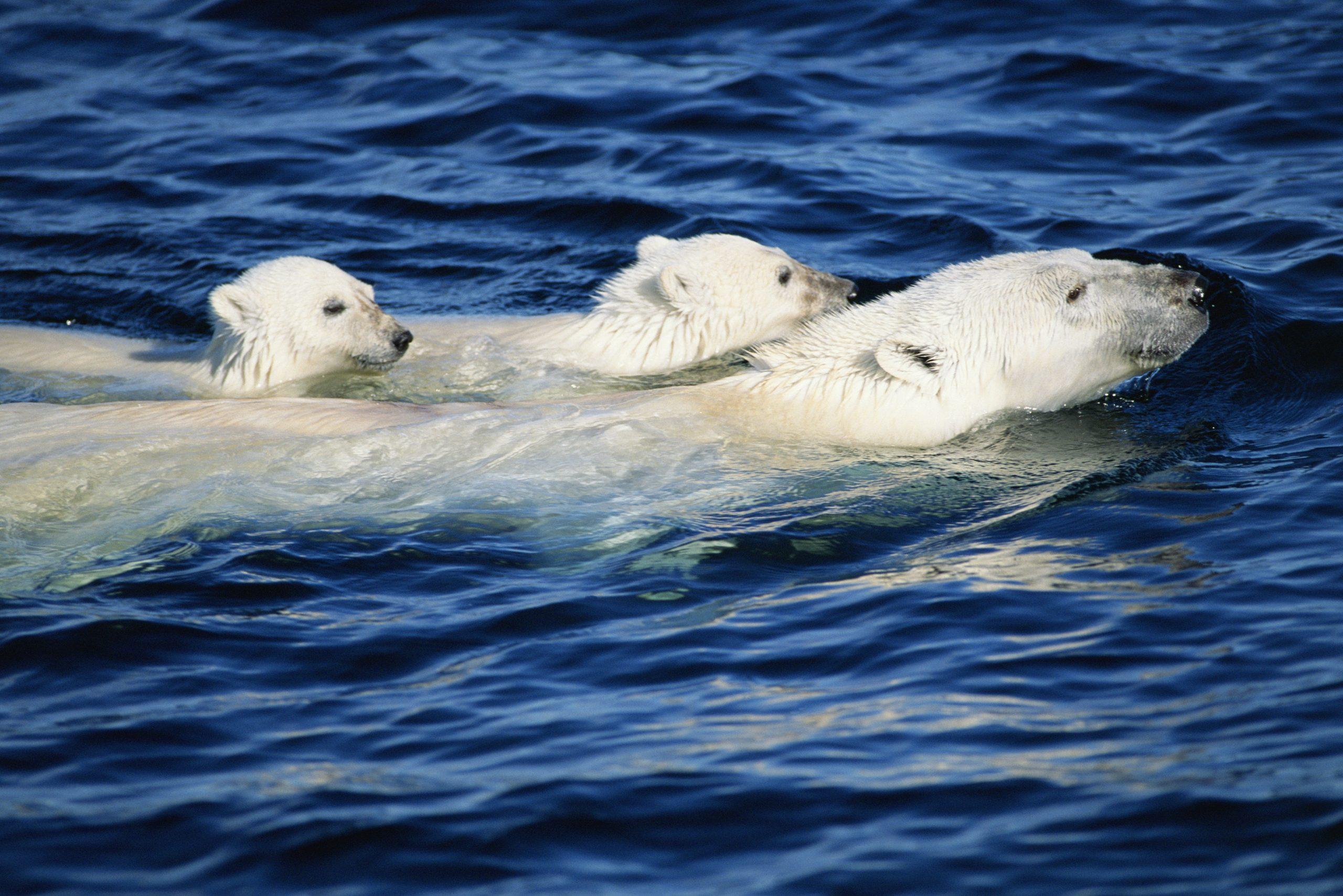 A exposición fotográfica Os nosos océanos estará en Burela, na praza do Concello, do 2 ao 18 de xullo.