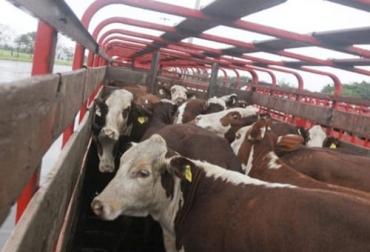 A Xunta organiza en Viveiro formación sobre benestar animal no transporte